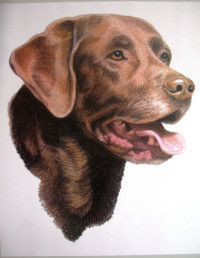 Pet Portraits – Drawings by Eunice Fisher
